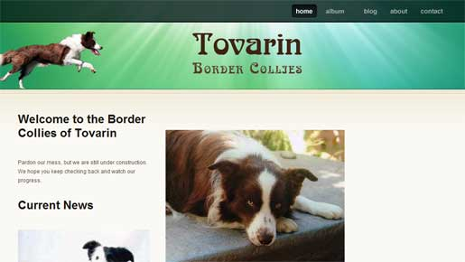 Tovarin Border Collies