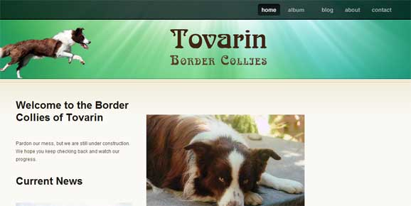 Tovarin Border Collies